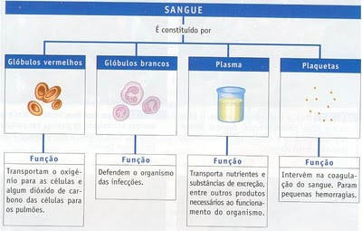 Limpeza do sangue no organismo