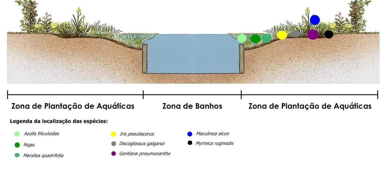 Piscina ecolgica tekna e ingeniera tener una piscina for Como hacer una piscina ecologica